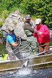 阿拉斯加-捕鱼指南捕网红鲑鱼! 库存照片