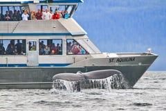 阿拉斯加-鲸鱼注意的尾标关闭! 免版税库存图片
