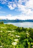 阿拉斯加- Kenai半岛Kachemak海湾 免版税库存照片