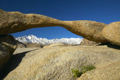 阿拉巴马小山成拱形构筑的惠特尼峰和多雪的山脉山在日出靠近孤立杉木,加州 库存图片