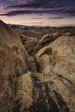 阿拉巴马小山,孤立杉木,加利福尼亚 免版税库存图片