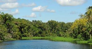 阿斯特佛罗里达圣约翰斯河风景 免版税库存照片