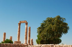 阿曼,约旦,中东 免版税库存照片