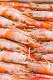阿根廷红色虾 库存照片