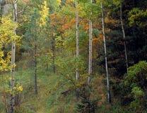 阿根廷峡谷在白色山野荒地,林肯国家森林,新墨西哥 库存图片