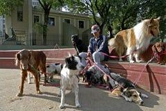 阿根廷狗临时替人照看孩子的人在城市布宜诺斯艾利斯 免版税图库摄影