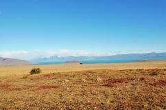 阿根廷的南美大草原 库存照片