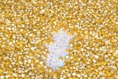 阿根廷的地图在玉米种子下背景的  免版税图库摄影