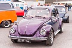阿格德,法国- 2017年9月9日:紫罗兰色 免版税库存图片