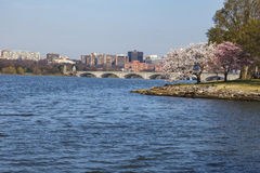 阿灵顿纪念桥梁在春天 库存图片