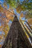 阿科底亚国家公园在秋天 库存照片
