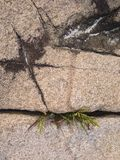 阿科底亚国家公园 免版税库存图片