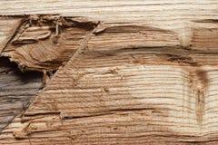 阿穆尔河软木树木头纹理 免版税库存照片