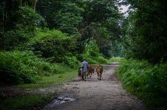 阿萨姆邦森林 免版税库存图片