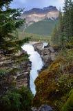 阿萨巴斯卡在冰原公路落 免版税库存图片