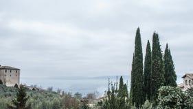 从阿西西的树 图库摄影