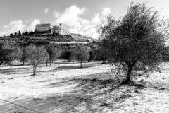 阿西西镇翁布里亚看法在冬天,与与雪和天空盖的橄榄树的一个领域用白色云彩 免版税图库摄影