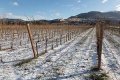 阿西西镇翁布里亚看法在冬天,当葡萄园被盖 库存图片