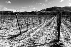 阿西西镇翁布里亚看法在冬天,当葡萄园被盖 库存照片