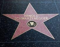 阿诺德・好莱坞schwarzenegger星形 库存图片