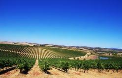 阿连特茹地区的葡萄园,葡萄牙 免版税库存照片