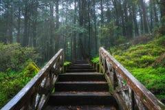 阿里山全国风景区 库存图片