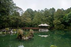 阿里山,嘉义市,台湾原始森林姐妹Tan 免版税库存照片