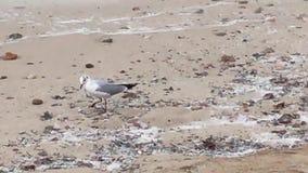 阿雷纳尔海滩和鸟 股票视频