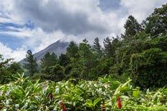 阿雷纳尔火山 免版税库存照片