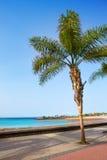 阿雷西费兰萨罗特岛Playa del Reducto海滩 免版税库存图片