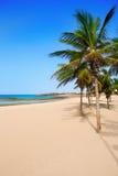 阿雷西费兰萨罗特岛Playa Reducto海滩棕榈树 免版税库存图片
