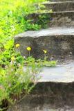 阿马里洛步骤的花生工厂台阶 免版税库存图片