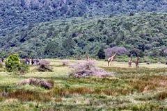 阿鲁沙国家公园 库存照片
