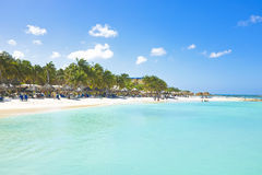 阿鲁巴的棕榈滩 库存照片