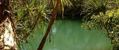 阿黛尔的树丛昆士兰 免版税库存照片