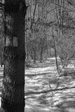 阿巴拉契亚足迹在冬天 免版税库存照片