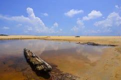 黏附在有美丽的蓝天的湖外面的漂流木头 微量 库存图片