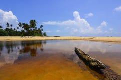 黏附在有美丽的蓝天的湖外面的漂流木头 微量 免版税图库摄影