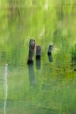 黏附在河外面的树干 库存图片