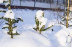 黏附在随风飘飞的雪雪外面的大树 库存图片