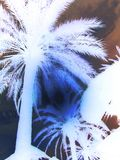 附庸风雅太阳通过消极的叶状体 免版税库存图片