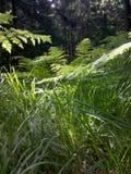 附近森林 免版税库存图片