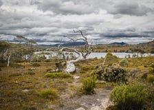 陆上风景,塔斯马尼亚岛 免版税库存照片