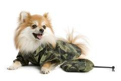 陆军小狗 库存图片