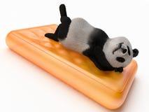 陆生动物熊猫大特别黑补丁认可的当地华中在耳朵的眼睛附近横跨rou 库存照片