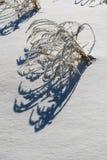 登陆草和阴影在新鲜的雪 免版税库存图片