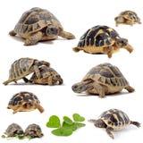 组草龟 库存图片