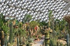 陈山植物园沙漠温室 免版税库存照片