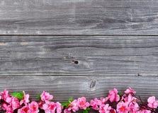 降低丝绸樱花分支边界在葡萄酒木头的  库存照片