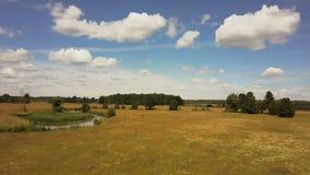 降低的寄生虫,批评左在茂盛的牧场 平安的晴朗的领域空中射击与小树和河的 4K 股票录像